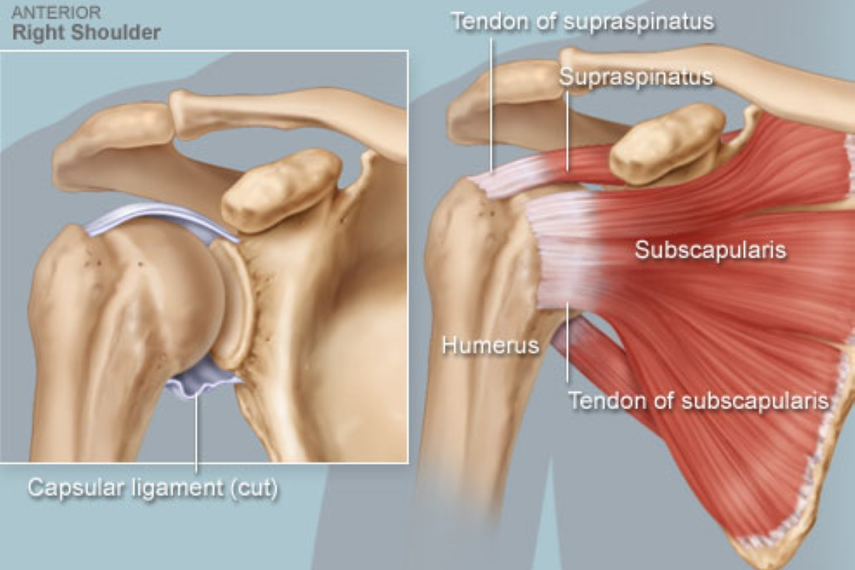 Rotator Cuff Muscle Exercises